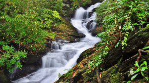 Forest Greenery Waterfall 4000x2657 Wallpaper