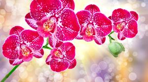 Bokeh Flower Orchid Pink Flower Sunbeam 3872x2592 Wallpaper