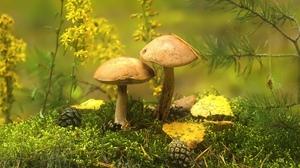Earth Mushroom 1920x1080 Wallpaper