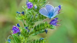 Animal Butterfly Blue Flower 2048x1173 Wallpaper