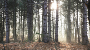 Nature Forest Sun Rays Warm 3840x2160 Wallpaper