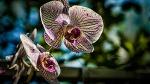 Flower Nature Orchid 2048x1365 Wallpaper