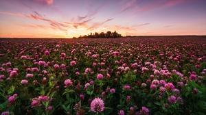 Field Flower Nature Pink Flower Sunrise 3840x2160 Wallpaper