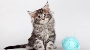 Cute Kitten Maine Coon 3000x1957 Wallpaper