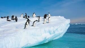 Adelie Penguin Animal Antarctica Bird Penguin Snow 1920x1273 Wallpaper