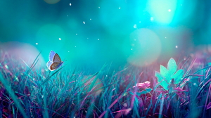 Animal Butterfly 1945x1080 Wallpaper