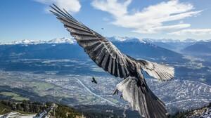 Crow Flight Landscape 2048x1336 Wallpaper