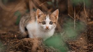 Baby Animal Cat Kitten Pet 2560x1707 wallpaper