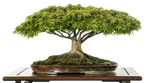 Earth Bonsai 1920x1200 wallpaper