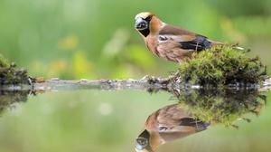 Bird Passerine Reflection Water Wildlife 3600x2400 Wallpaper