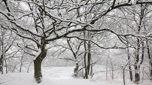 Nature Snow White Cold 3840x2160 Wallpaper