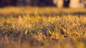 Earth Grass 2560x1600 Wallpaper