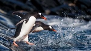 Penguin Wildlife 2048x1365 Wallpaper