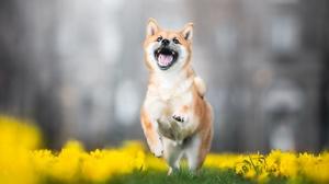 Flower Dog Daffodil Pet 2048x1365 Wallpaper