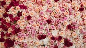 Flower Pink Flower Red Flower Rose White Flower 5262x3524 wallpaper