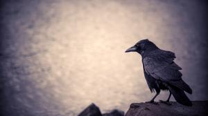 Bird Crow 4928x3264 Wallpaper