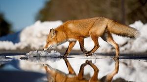 Animal Fox 2048x1363 Wallpaper