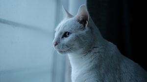Blue Eyes Cat Pet Profile 3840x2160 Wallpaper