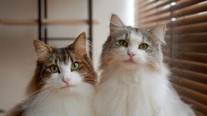 Cat Pet 5710x3799 Wallpaper