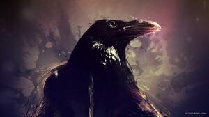 Animal Crow 1920x1080 Wallpaper