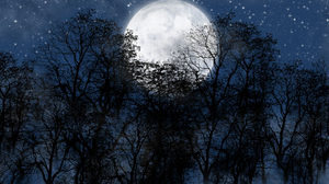 Artistic Blue Forest Moon Night Silhouette Starry Sky Tree 1920x1080 Wallpaper