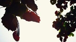 Fall Leaf Nature 2560x1702 Wallpaper