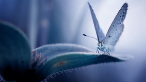Macro Blue Plants Flowers Animals Insect Butterfly Nature 2500x1667 Wallpaper