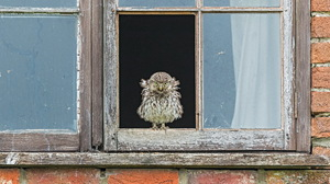 Animals Window Glass Birds Owl 2047x1230 Wallpaper