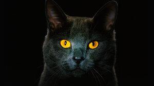 Animal Cat 1920x1200 wallpaper