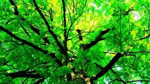 Earth Tree Green Branch Leaf Canopy 2560x1600 Wallpaper