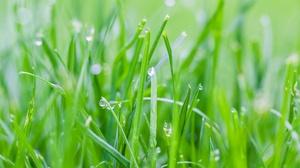 Grass Green Macro Nature 2048x1365 Wallpaper