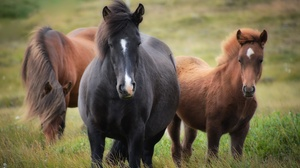 Animal Horse 4496x3000 Wallpaper