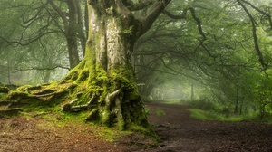 Nature Trees Forest Outdoors 3840x2160 Wallpaper