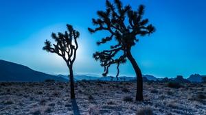 California Desert Tree Usa 2560x1600 wallpaper