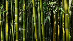 Bamboo Jungle Nature 3840x2160 Wallpaper