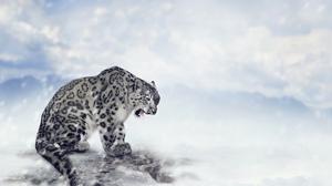 Big Cat Snow Leopard Snowfall Wildlife Predator Animal 5600x4200 Wallpaper