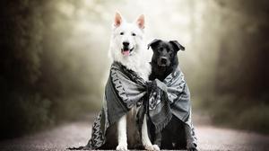 Depth Of Field Dog Pet Scarf 2048x1365 wallpaper
