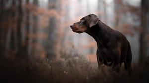 Depth Of Field Dog Pet 2048x1280 wallpaper