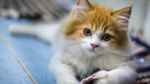 Animal Cat Cute Kitten 1928x1278 Wallpaper