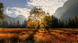California Meadow Mountain Tree 2048x1365 wallpaper