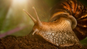Macro Snail 2048x1365 wallpaper