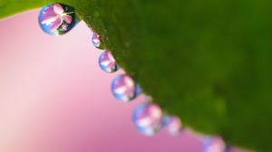 Macro Nature Pink Flower Reflection Water Drop 2560x1440 Wallpaper