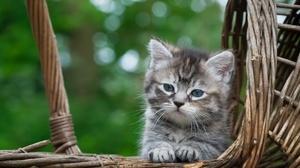 Kittens Cats Animals Mammals Baskets Outdoors Feline 2000x1333 Wallpaper