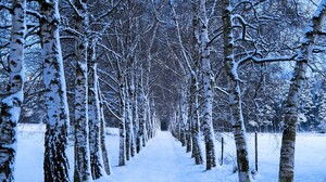 Birch Earth Path Snow Tree Tree Lined Winter 2560x1600 wallpaper