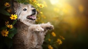 Dog Pet Yellow Flower 2048x1365 Wallpaper