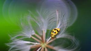 Insect Ladybug 2048x1366 Wallpaper