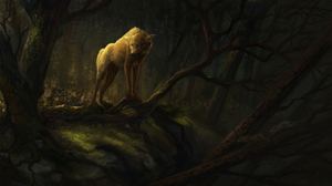 Animal Forest Wolf Predator Animal 2500x1406 Wallpaper