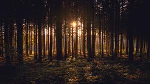 Forest Sunlight 3840x2160 Wallpaper