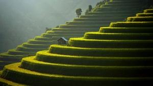 Asia Landscape Field Plants Agro Plants 3840x2160 Wallpaper