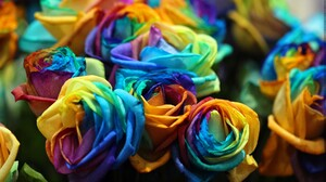 Colorful Flower Rose 1920x1200 Wallpaper